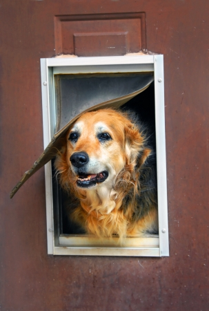 Aging dog and aging home photo