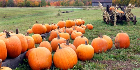 Pumpkins lay in group with view of barn, pond and rustic antique wagon   Fall foliage lines woods behind pond  Stock Photo