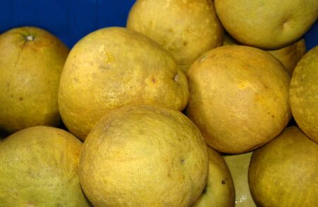 home grown:  Home grown Pamelos, variety of grapefruit, lay in a pile in blue bin at the Hilo Farmers Market on the Big Island of Hawaii