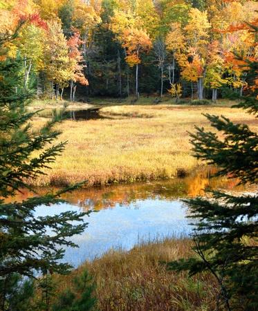Two small beaver ponds reflect the Autumn color of Upper Pennisula, Michigan   Fir tree branches frame tranquil scene