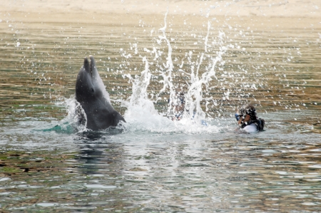 frolicking: Instructor and child are drenched during this dolphins playful interaction with them.  Swimming with this dolphin causes the dolphin to grin with glee as he backward flips.