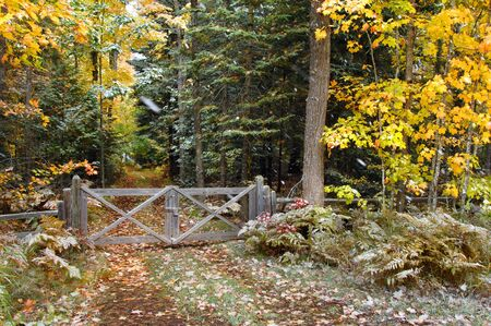 upper peninsula: Rustic, wooden gate and fence bar the entrance to a small dirt lane in the woods of Upper Peninsula, Michigan.  Yellow leaves give way to winter as snow flakes fall.