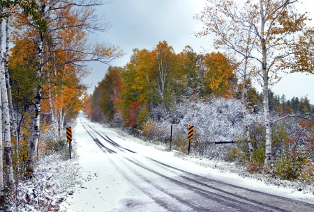 winter road: Highway disappears into a tunnel of overhanging branches of gold and red.  Tire tracks in the snow disappear into the colorful leaves. Stock Photo