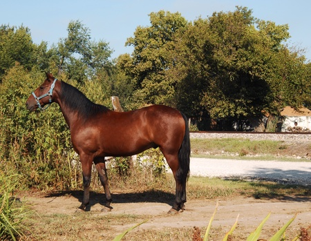 Chestnut colored horse stands besides fence in central Kansas.