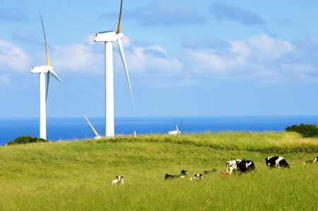 harnessing: Wind farm combines with dairy farm on the Big Island of Hawaii.  Horizon is filled with blue ocean.