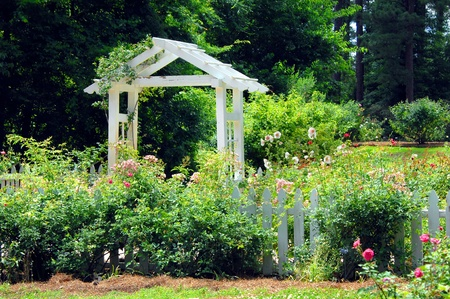 Gardens of the American Rose Center in Shreveport, Louisiana has beautiful landscaping with this white wooden pavillion and white picket fence.  Hollyhocks and roses bloom together around fence. Stock Photo