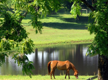 Beautiful chestnut horse concentrates on eating the green spring grass in field besides lake. Banco de Imagens