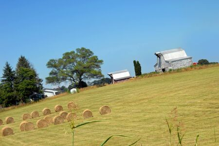 Angled image shows two barns with a field full of round hay bales.  Big barn is white, weathered and wooden. Stock Photo - 14863072