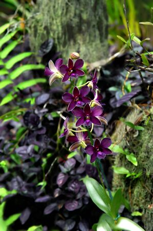 exotics: Beautiful Hawaii National Tropical Botanical Garden offers so many different vaieties of exotic and tropical flowers.  This spray of orchids is purple