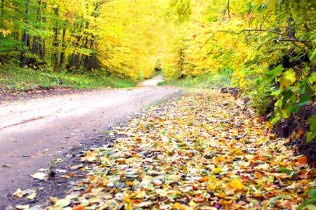 curving: Beckoning, curving dirt road leads beneath a tunnel of brilliant, yellow leaves on tunnel road in Upper Peninsula, Michigan. Stock Photo