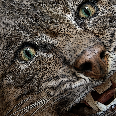 bobcat: Angry is illustrated with this closeup graphic of a bobcat   Teeth are barred and eyes are fierce  Stock Photo