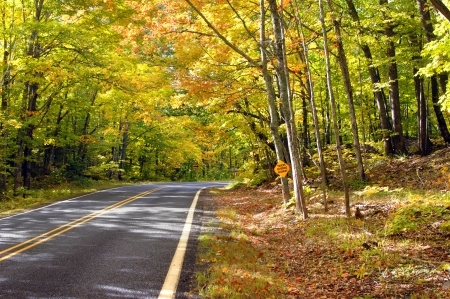 overhanging: Sign on tree warns  trucks entering highway    Overhanging branches form a tunnel of gold and yellow on a secluded highway in Upper Penninsula, Michigan  Stock Photo