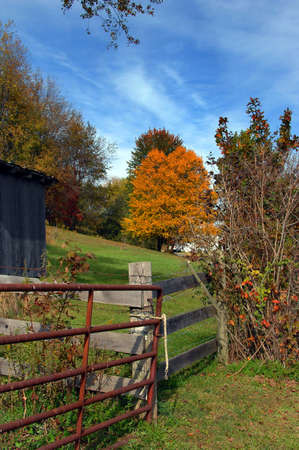 partitions: Virginia farm has rustic metal gate tied with a rope   Wooden fence partitions off small pasture with golden tree colored by Autumn