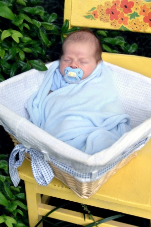 Newborn lays in wicker basket on a bright yellow wooden chair   Chair and baby are surrounded by nature and green leaves  photo