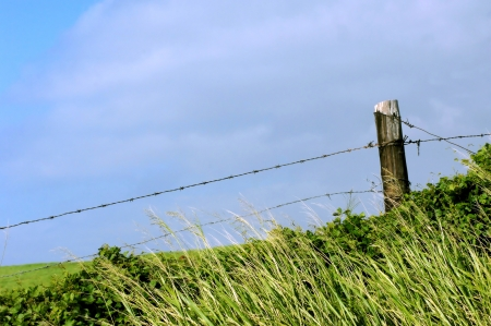 An old barbed wire fence on the Big Island of Hawaii is slowly being replaced by new fencing as the old news repairs   Old wooden fence post holds both strands in place Stock Photo - 15024515