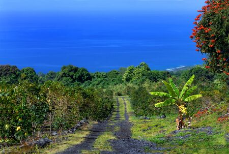 Narrow one lane gravel and dirt road ascends from the coastline, winding around cliffs and trees to reach the distant coastline   An African tulip tree is blooming on small farm   Irrigation pipe runs under the road and down the hill  photo