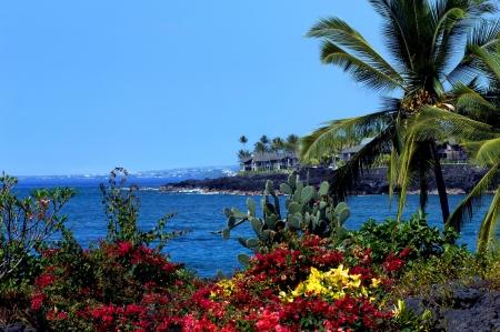 clima tropical: Bougainvillias y cactus florecen lado a lado en el clima tropical de la isla grande de Hawaii