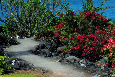 Bougainvillia beckons you to explore the crooked pathway around the ocean photo