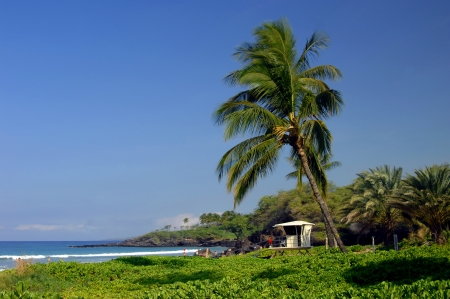 spencer: Spencer Beach Park on the Big Island of Hawaii is watched over by life guard stations   Leaning Palm trees sway in the tropical breezes  Stock Photo