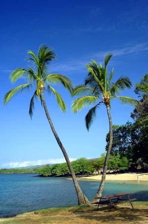 sloping: Vivid blue skies frame two split palm trees on a beach on the Kohala Coast on the Big Island of Hawaii   Swimmers enjoy the gently sloping beach