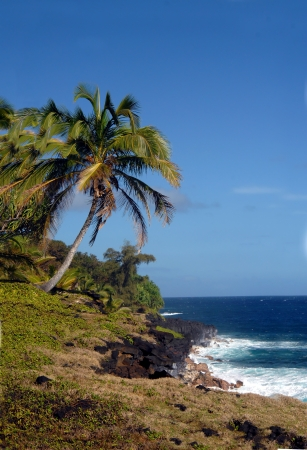 windward: Curving palm tree leans toward the aqua blue waters off the shore of the Big Island of Hawaii   Windward shore south of McKinzie State Park  Stock Photo