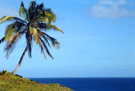 Lone palm tree bends toward the azure waters of the Pacific Ocean off the shores of the Big Island of Hawaii  photo