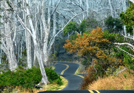 off path: Mauna Loa strip road winds and curves up the gentle slopes of this volcanoe   Pavement clings to each movement