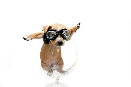 Puppy dragen van een veiligheidsbril en zwarte leren jas is gevangen in een glazen bokaal Hij kan ofwel was je op zoek naar zijn motorfietsen of zijn vliegtuig