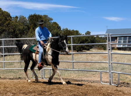 Male trainer takes his horse through his paces as he circles metal pen   Man is wearing jeans and a denim shirt topped by a black leather cowboy hat