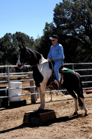 Horse trainer works with his black and white paint, Tennessee Walker   Horse is performing with his feet on a platform   Trainer is wearing jeans and denim shirt and black cowboy hat  Stock Photo - 15044770