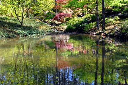 Quiet pool with small waterfall is complete with Koi fish   Japanese maples and pink dogwoods reflect in pool alongside blue sky   Garvin