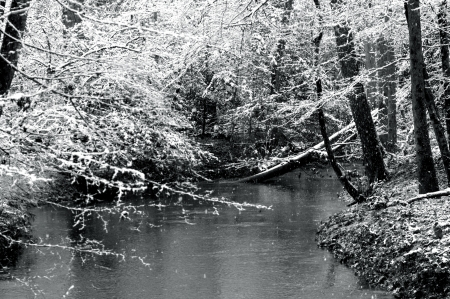 hardwoods: Snow falls gently on Lost Creek.  Fallen log spans narrow creek as snowy branches cover black and white scene.