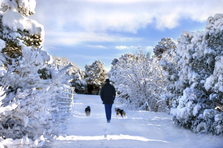 Man and his two dogs amble through a New Mexico winter wonderland.  Road is covered with snow as are the trees.  Morning sky begins to turn blue.