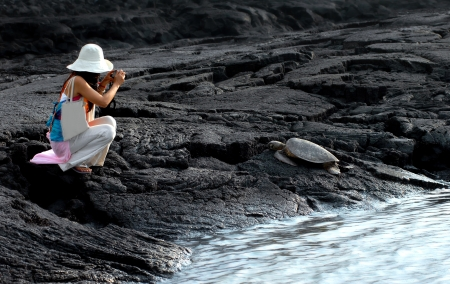 Tourist kneels to take a picture of a sleeping sea turtle on the Big Island of Hawaii at Puuhonua o Honaunau National Historical Park   Protected, sea turtles, laws require boundaries for resting turtles  photo