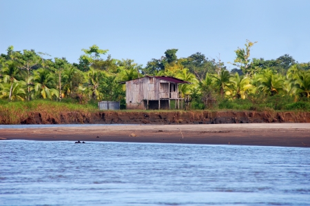 costa rican: Costa Rican house on stilts stands besides river with palm trees and rainforest in background.