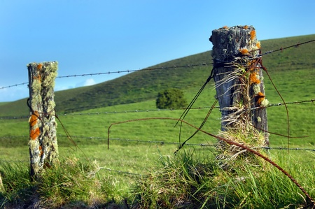 barbed wire fences: Upcountry fence on the Big Island of Hawaii is overgrown with lichen and mosses   Barbed wire fences surround the Kohala Mountain ranch land  Stock Photo