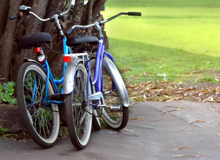 rentals: Hawaiian bike rentals are a good way to stay in shape and see the island   These two bikes are propped against a tree with green grass in the background  Stock Photo