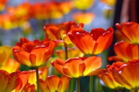 Garvins woodland garden in hot springs arkansas glows with spring garvins woodland garden in hot springs arkansas glows with spring color as orange and yellow mightylinksfo