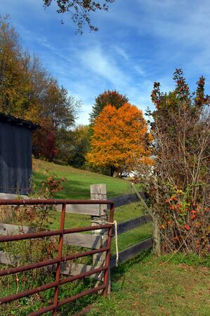 partitions: Virginia farm has rustic metal gate tied with a rope.  Wooden fence partitions off small pasture with golden tree colored by Autumn.