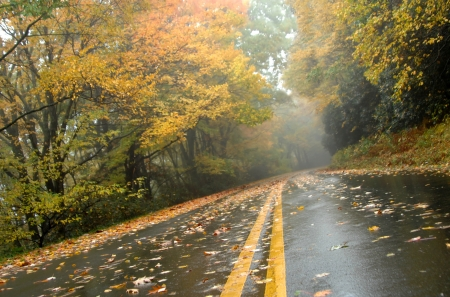 Autumn colors wet road of the Blue Ridge Parkway with gold   Road runs through Asheville, North Carolina