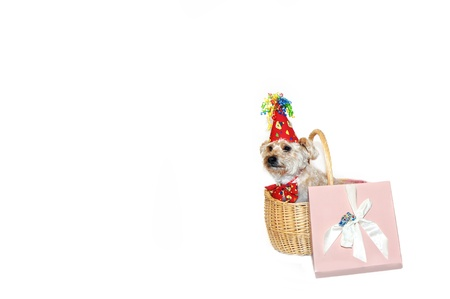 Happy birthday dog sits inside a gift basket besides a pink gift box.  She is wearing a hat with curly ribbon and matching bow tie. Banque d'images