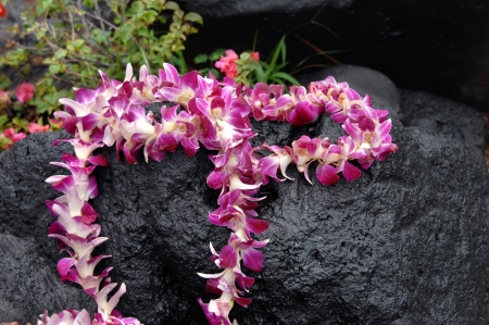 Tourist leaves token offering of orchid lei on black lava stone.  Stone is wet and water drops cling to lei. Standard-Bild