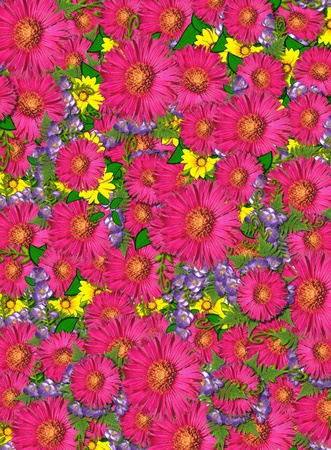Carpet of flowers cover image   Pink shasta daisies and yellow and purple flowers form carpet of blooms