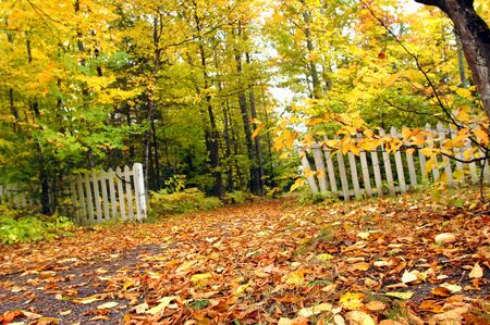 encroaching: Golden shower of Autumn leaves cover narrow lane   Low angle image shows white picket fence with peeling paint struggling against the encroaching forest of trees  Stock Photo