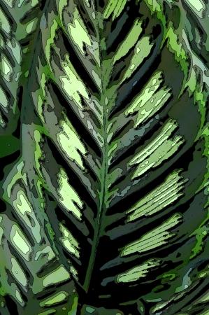 Illustration of the Makoyana Windows Calathea in tones of green from light to dark.