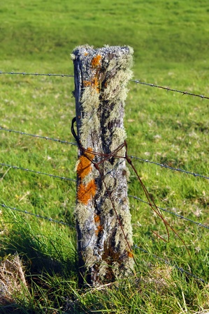 Closeup view of a rotting fence post alive with lichen and moss and mold.  Rusty wire is wrapped around post and new barbed wire runs to the next post.  Green grassland of upcountry Big Island, Hawaii covers background. photo