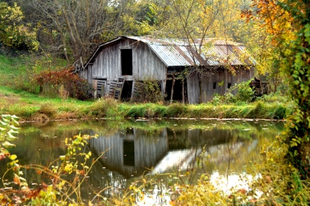 Abandoned wooden barn is reflected in a pond   Autumn foliage surrounds pool and barn with gold   Weathered wood and tin roof are cracked and in need of repair  Stock Photo