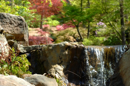 Garvin's Woodland Garden in Hot Springs, Arkansas, features a landscape of waterfalls, pools and bridges.  Japanese Maple and springtime trees give splash of red and green.