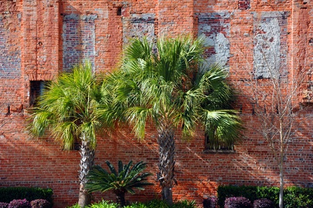 Vintage brick wall in downtown Columbia, South Carolina has been landscaped and rejuvinated.  Three Palmetto palm trees stand against rustic brick wall.