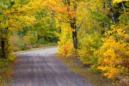 upper peninsula: Yellow awaits around the next bend in this country lane in Upper Peninsula, Michigan.  Narrow dirt lane is surrounded by brilliant yellow color.